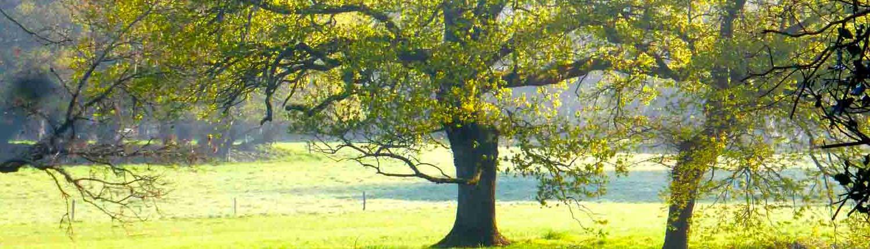 Location grand gîte de groupe nature et calme en Bretagne